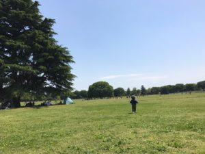 昭和記念公園 ケヤキ