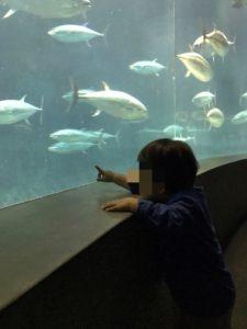 葛臨海水族園 マグロ